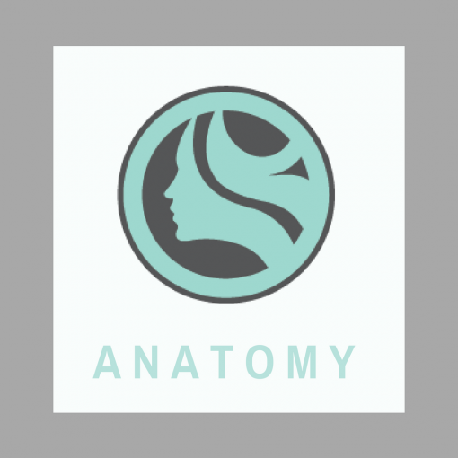 123 Face Anatomy Online Courses tx nm al ar lmt